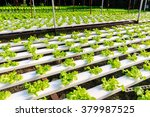 hydroponics method of growing... | Shutterstock . vector #379987525