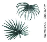 fan palm tropical leaves exotic ... | Shutterstock . vector #380056429