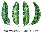 banana leaves tropical exotic... | Shutterstock . vector #380057149