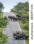tourist in jeep safari looking... | Shutterstock . vector #380097154
