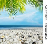 White Pebbles And Palm Tree By...