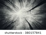 Forest Trees Against Sky At...