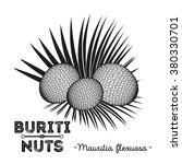 buriti nuts or mauritia... | Shutterstock .eps vector #380330701