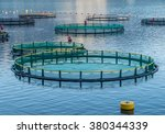 big cages for fish farming in... | Shutterstock . vector #380344339