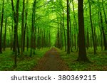 green forest and the path | Shutterstock . vector #380369215