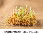 handful of wheat germs on the... | Shutterstock . vector #380443231