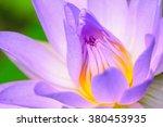 Close Up Of Beautiful Lotus ...