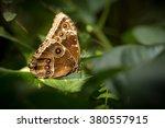 butterfly | Shutterstock . vector #380557915