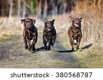 Three Happy Dogs Running...