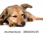 Cute mixed breed dog sleeping portrait at studio - stock photo