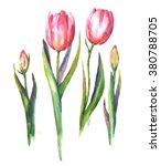 hand drawn watercolor... | Shutterstock . vector #380788705