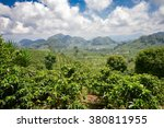 coffee plantations with the... | Shutterstock . vector #380811955