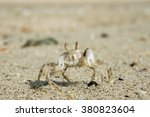 Small Sandy Crab With Claws On...