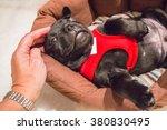 Cute Puppy Stafforshire Bull...