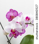 bright orchid flowers.... | Shutterstock . vector #380840527