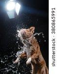 nova scotia duck tolling... | Shutterstock . vector #380865991