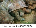 giant turtles in the... | Shutterstock . vector #380898874
