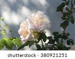 stunningly  magnificent... | Shutterstock . vector #380921251