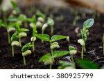 agriculture  seeding  plant... | Shutterstock . vector #380925799