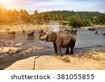 Elephants Bathing In The River...