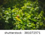 bee on yellow flower. close up. ... | Shutterstock . vector #381072571