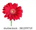 red gerbera flower on the white ... | Shutterstock . vector #381299719