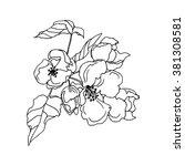 apple flower in blossom ... | Shutterstock .eps vector #381308581