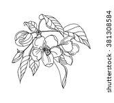 apple flower in blossom ...   Shutterstock .eps vector #381308584