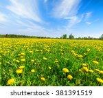 yellow flowers  field under... | Shutterstock . vector #381391519