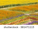 beautiful colorful flowers... | Shutterstock . vector #381471115