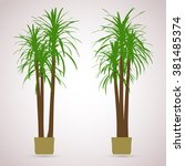 Palm. Color Planting Of...