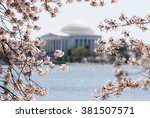 Cherry Blossom In Washington D...