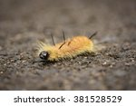 Small photo of American Dagger Moth Caterpillar