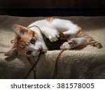 Stock photo the kitten plays with a ball of yarn kitten funny cat playing fun 381578005