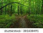 green forest and the path | Shutterstock . vector #381638491