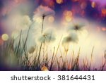 arctic cotton flowers | Shutterstock . vector #381644431