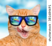 Stock photo cat wearing sunglasses relaxing in the sea background 381684691