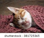 Cute Ginger Kitten Sleeps Unde...