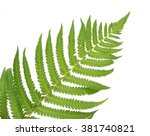 Two Fresh Ferns Isolated On...