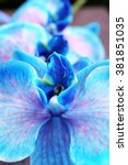 Beautiful Blue Orchid Flowers ...