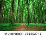 beautiful green forest | Shutterstock . vector #381862741