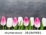 tulips  flowers white and pink  ... | Shutterstock . vector #381869881