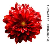Small photo of Surreal wet dark chrome red flower dahlia macro isolated on white