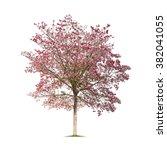 Isolated Tabebuia Rosea Tree O...