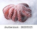 Octopus Isolated On The White...