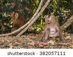Monkeys Sit Eye Closed On The...
