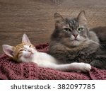 Cat And Kitten Resting On A...