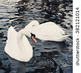 White Swans Swimming In The...