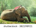 Stock photo child girl sleeping on baby elephant 382198921