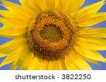 sunflower | Shutterstock . vector #3822250